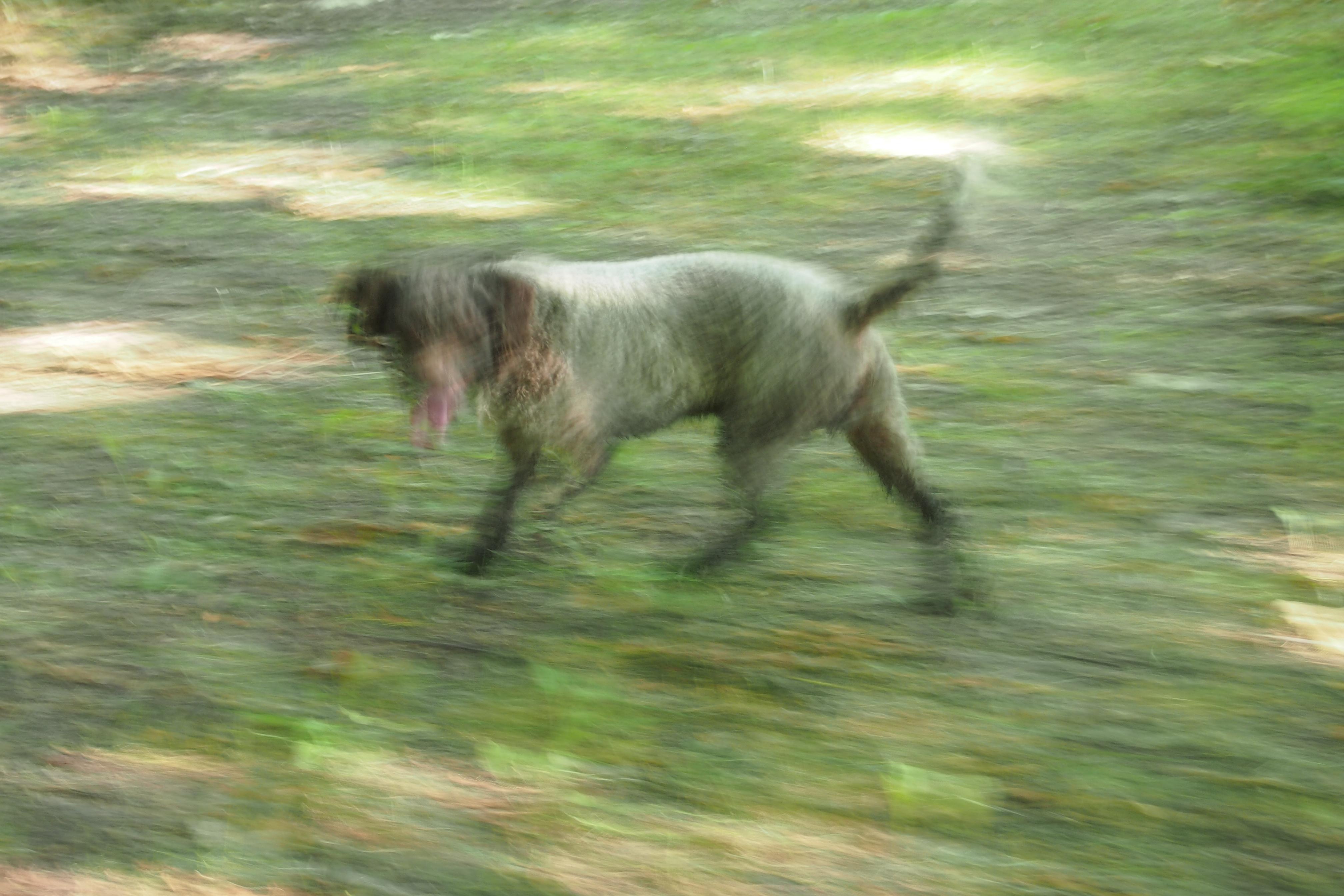 Photography, truffel dog